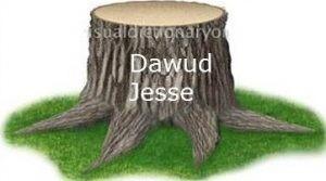 کاٹا ہوا درخت
